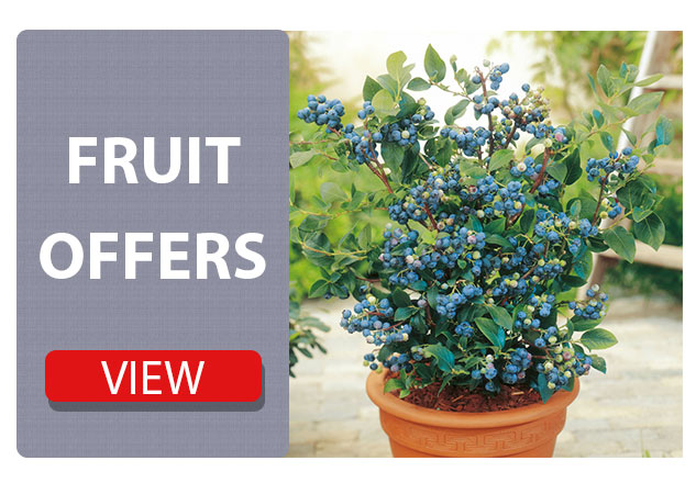Fruit plant offers