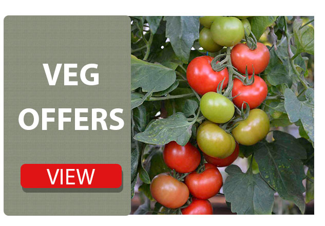 vegetable plant offers