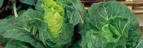 Vegetable Seeds to Sow inMay - Click to View