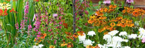 Buy Perennial Plants - Click to View