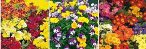 Order Bedding Plants - Click to View