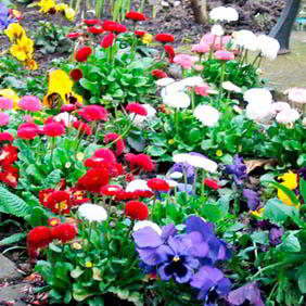 Autumn Bedding Plants
