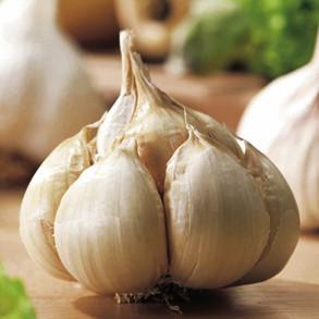 Autumn Planting Garlic