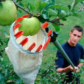 Fruit Growing Accessories