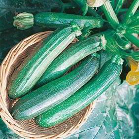 Courgette Plants