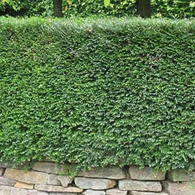 Evergreen Hedging