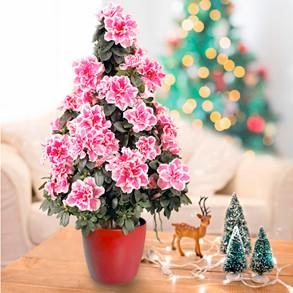 Festive Plants