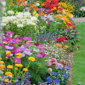All Flower Plants