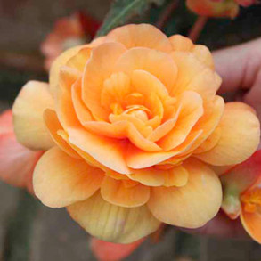 Flowers to Sow in January