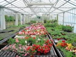 Main Greenhouse flower trial in progress