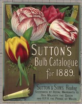 Sutons Poster