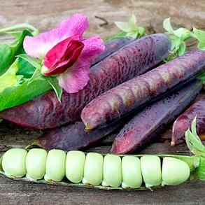 New Vegetable Seeds