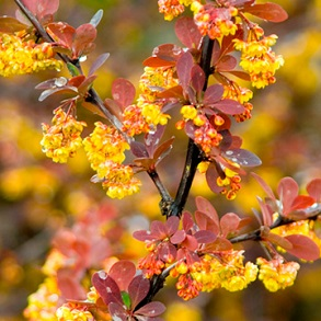 View All Trees Shrubs Offers