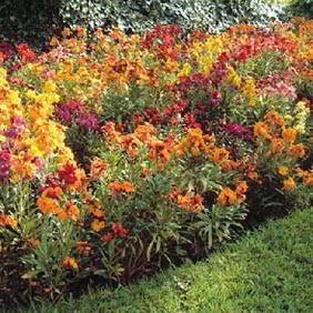 Popular Flower Plants