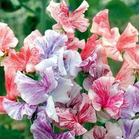 Popular Flower Seeds