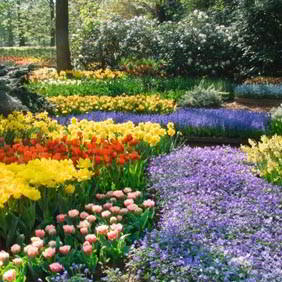 Popular Flower Bulbs
