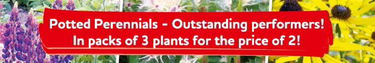 outstanding potted perennials