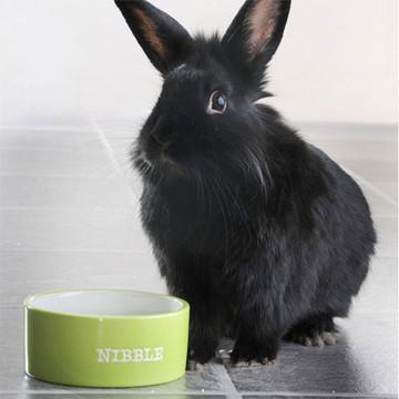 Small Animal Bowls