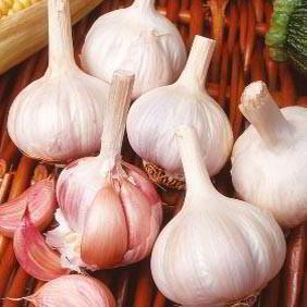 Spring Planting Garlic