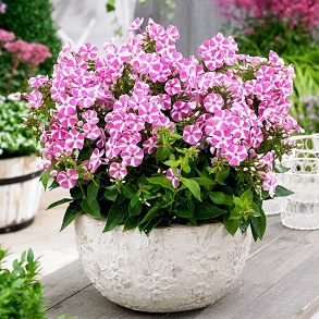 A Wide Range Of Flower Plants From Suttons Seeds Suttons