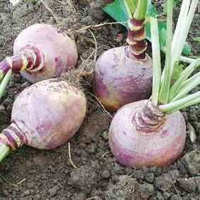 Swede Seeds
