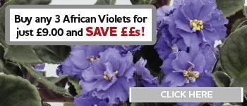African Violets Offer