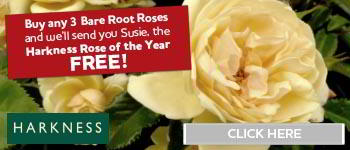 Harkness Roses Offer