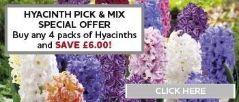 Hyacinth, Buy 4 save £6