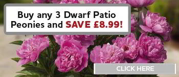 Buy any 3 Dwarf Patio Peonies and Save £8.99