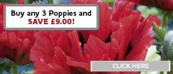 Poppies Offer