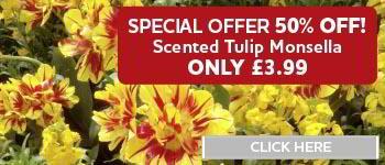 Half Price Tulip Monsella