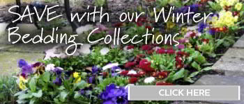 Save with our Winter Bedding Collection