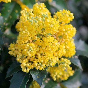 Types of Trees and Shrubs
