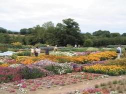 The Open day garden