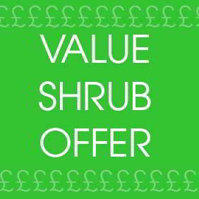 Value Shrub Offer