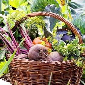 All Vegetable Plants