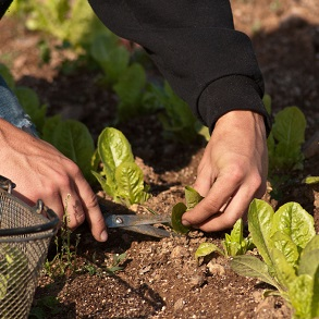 When to Sow Vegetables