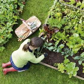 Square Metre Gardening
