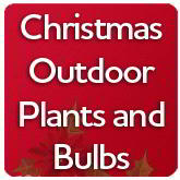 Christmas Outdoor Plants and Bulbs
