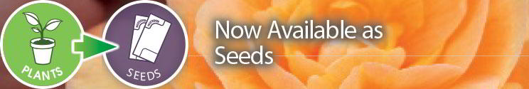 Now Available as seeds