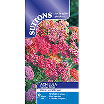 Achillea Seeds - Summer Berries