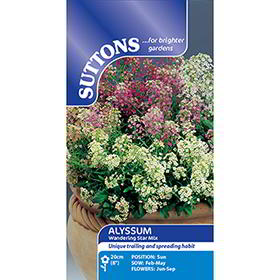 Alyssum Seeds - Wandering Star Mix
