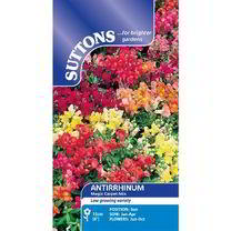 Antirrhinum Seeds - Magic Carpet Mix