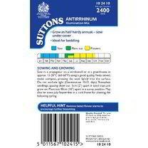 Antirrhinum Seeds - Illumination Mix