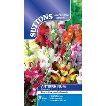 Antirrhinum Seeds - Chuckles