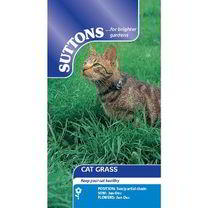 Stop cats nibbling your potentially harmful houseplants with this great alternative. Cat Grass is nutritious and tasty, with naturally sweet stems, th