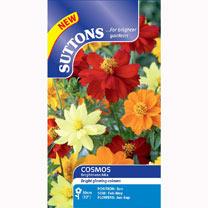 Cosmea Seeds - Brightness Mix