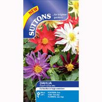 Dahlia Seeds - Dwarf Cactus Mix