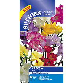 Freesia Seeds - Mix