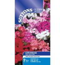 Geranium Seeds - Capri Mix